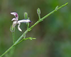 گیاهانبرترجهان(۲)