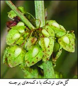 گیاهان برتر جهان (۱۱)
