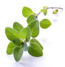 تدبیـر دیابت با گیاهان