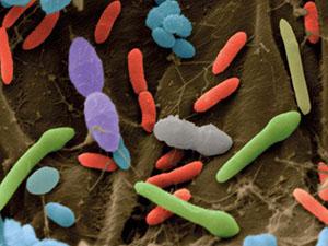 باکتریهای روده و موادغذایی