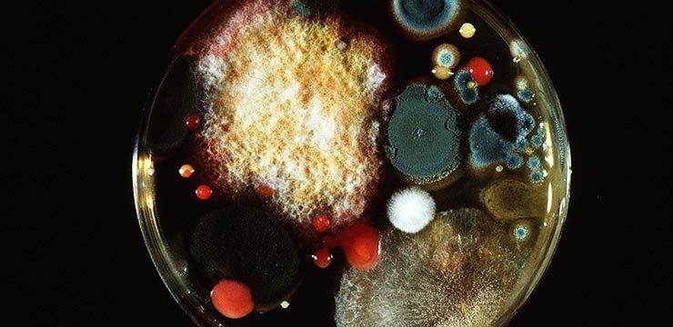 روش سریعتر تشخیص میکرب در غذا