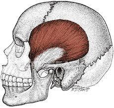 درد راجعه در مفصل فک