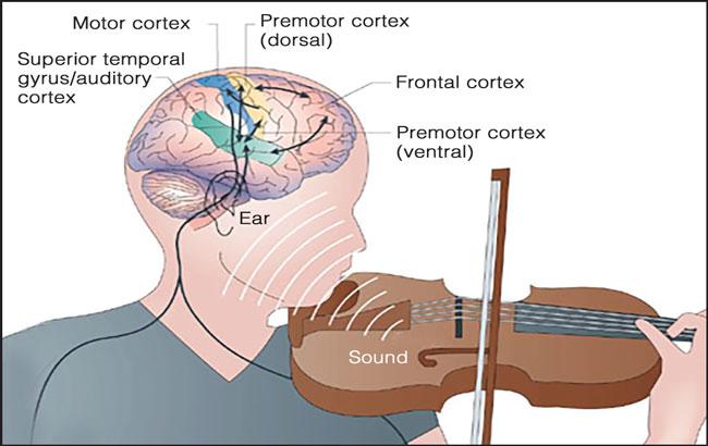 موسیقی و مغزهیجانی (احساساتی)
