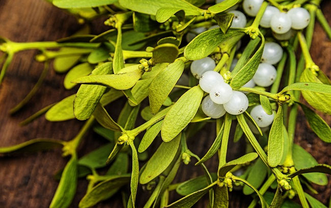 پژوهشهای نوین پیـرامون اثر ترکیبات فنلی گیاه دارواش