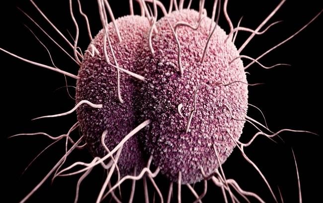 تاثیر باکتری گنورهآ برمکانیسم ضدعفونت موجود دردستگاه تولیدمثل زنان