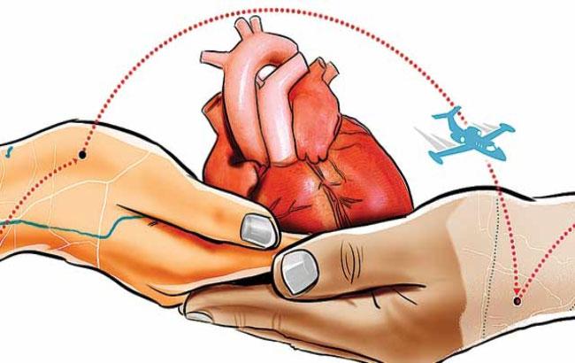 تمدید زندهنگاه داشتن قلب خارج از بدن