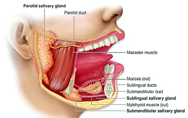 نقش بزاق در پیشبرد سلامت دهان
