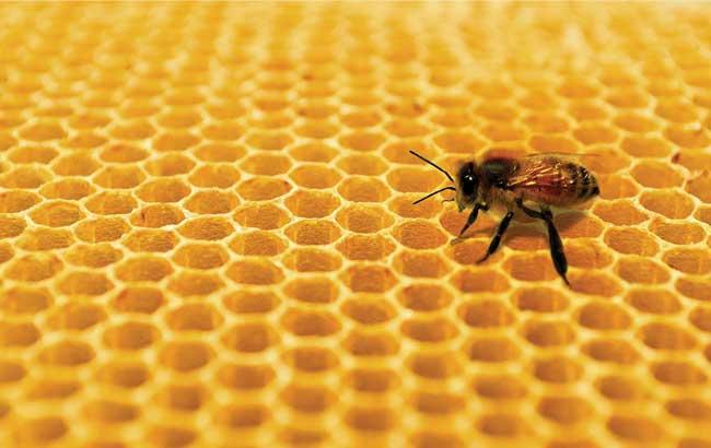 داروسازی با محصولات زنبورعسل