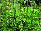 گیاهان برتر جهان (۹)