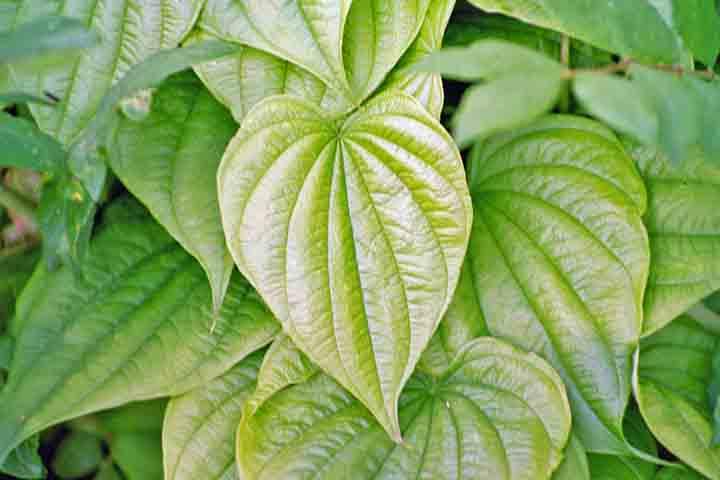 گیاهان برتر جهان(۲-۷)