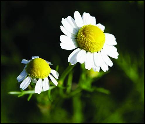 گیاهان برتر جهان(۱-۴)
