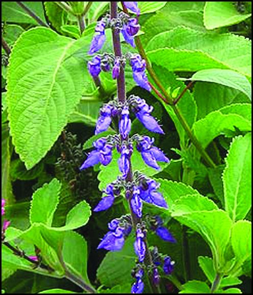 گیاهان برتر جهان (۱۳)