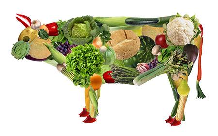 نارسایی کلیه و جیرهغذایی