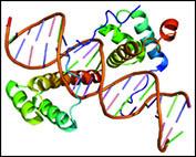 تشخیص ژنهای منشأ سرطان تخمدان