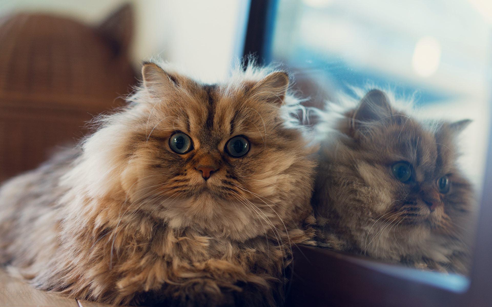 خطرات نگهداری از حیوانات خانگی (۳)