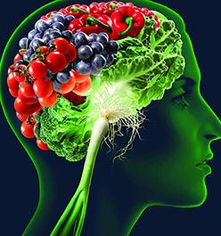 گیاهان ومواد غذایی موردنیاز مغز