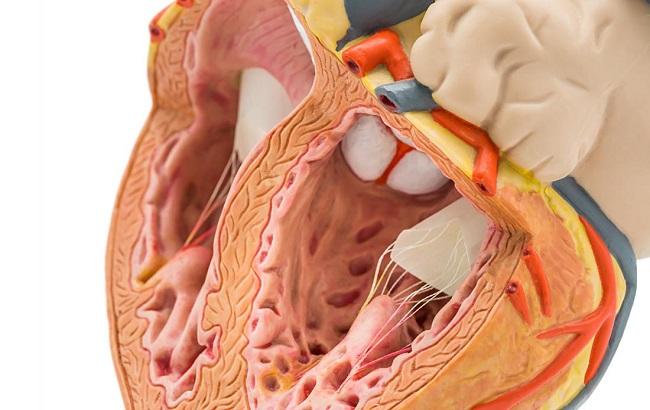 روزانه ۳۰۰ بیمار قلبی فوت می کنند