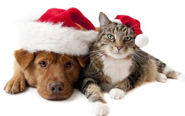 توصیههای مهم وزارت بهداشت به افرادی که حیوان خانگی دارند