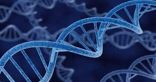 شناسایی مشخصات ژنتیکی گستره ژنومی جمعیت ایرانی