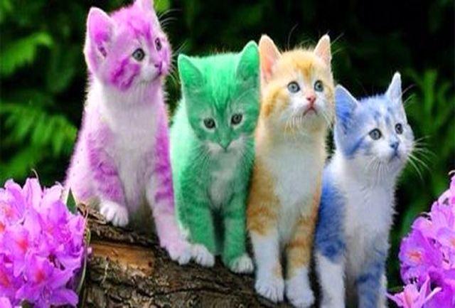 گربهها چه بیماریهایی به شما منتقل میکند