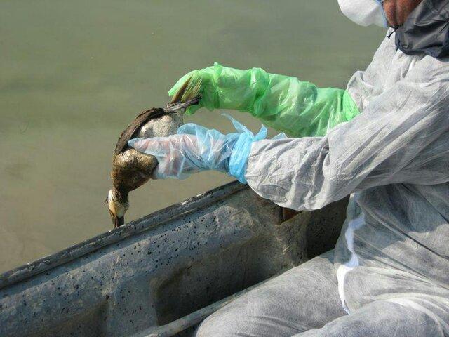 هشدار دامپزشکی گلستان در خصوص آنفلوانزای پرندگان