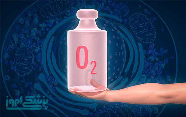 جایزۀ نوبل 2019 ، کشف کلید مولکولی