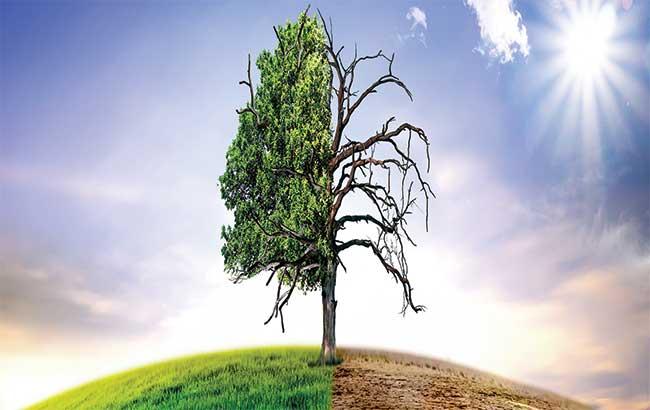 تغییرات آب و هوایی  و بیماریهای عفونی جدید