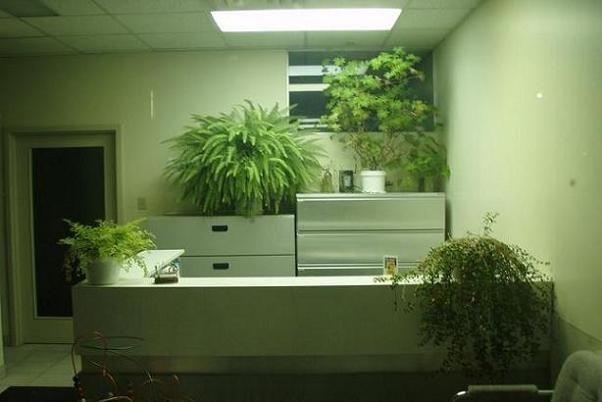 وجود گیاه آپارتمانی در محل کار موجب کاهش استرس می شود