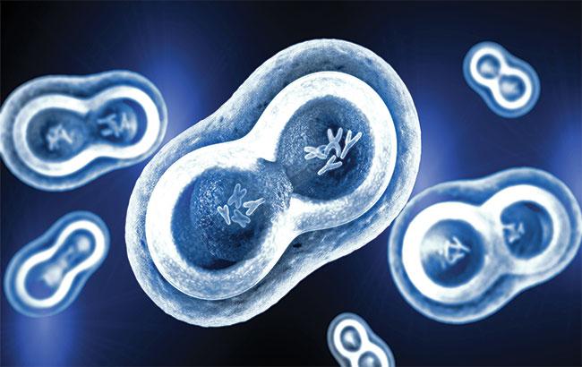 مطالعه : ژن درمانی موثر در  درمان سندرم بارت